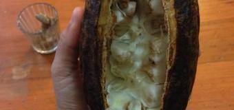 [Crónica] Fruta curativa